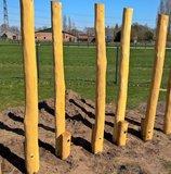 robinia hout palen kopen stelten openbaar gebruik